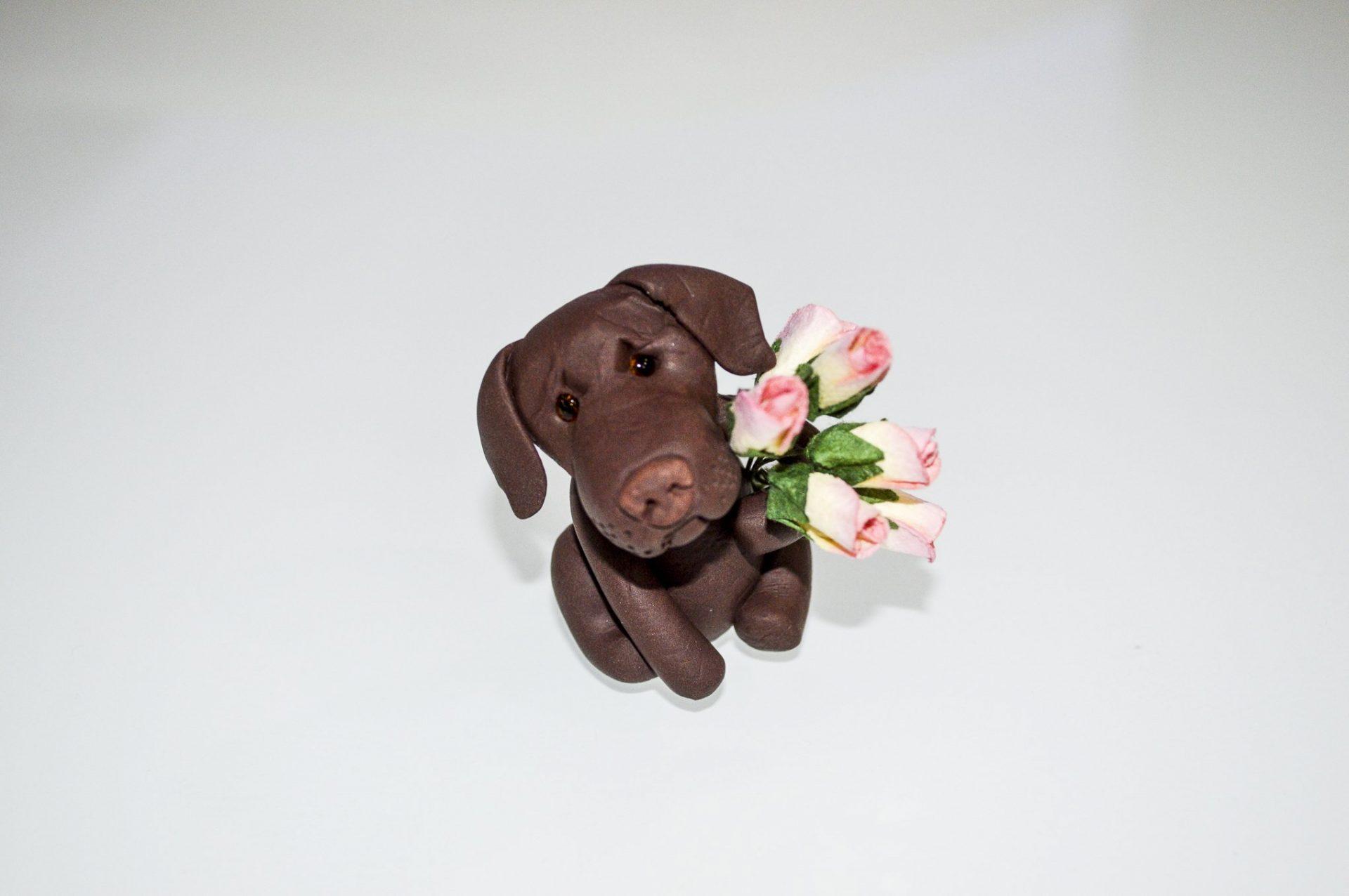 Chocolate Labrador With Love Odd Bulls Amp Friends