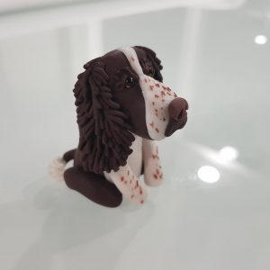 Springer Spaniel – Freckles